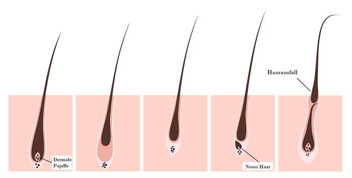 Haarwachstumskreis Info Grafik