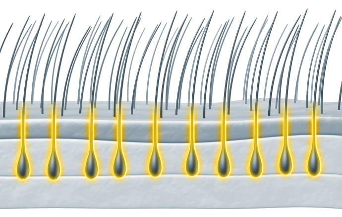 Aufbau der Haarwurzel - Infografik